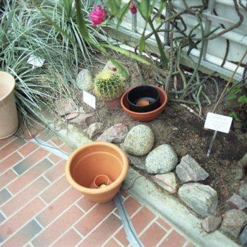 Teoksen nimi: Keskusteluja kasvien kanssa, 2008