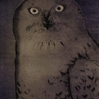 Teoksen nimi: Tunturipöllö