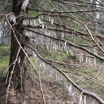 Teoksen nimi: Kaukokaipuun puu, Tree of Wanderlust