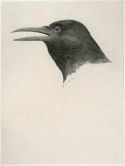 Musta lintu, 2010