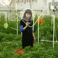 Mayumi Niiranen-Hisatomi