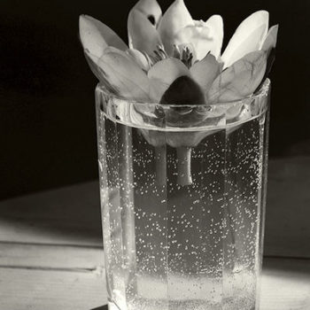 Teoksen nimi: Flower in Glass 1986