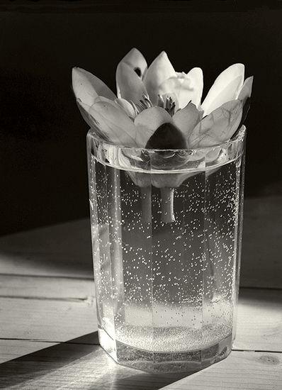 Flower in Glass 1986