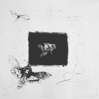 Teoksen nimi: Vaaran pelko, 50 x 50, 2015 Firenze