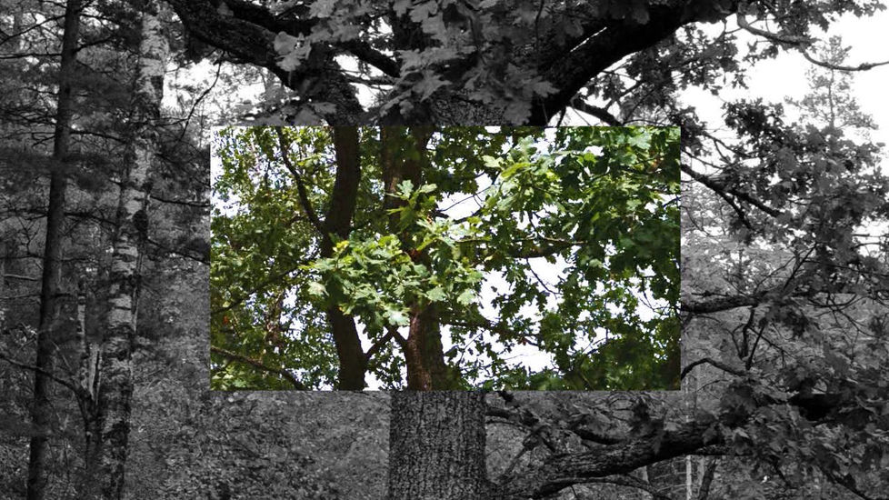 Still-kuva videosta The tree is my body-The wind is my breathing 2014