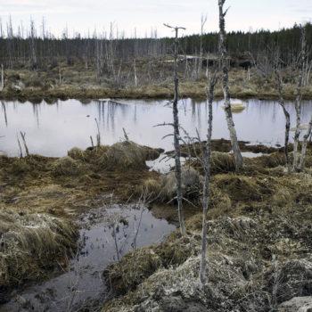 Teoksen nimi: Lumijoki I, 2013, mustevedos