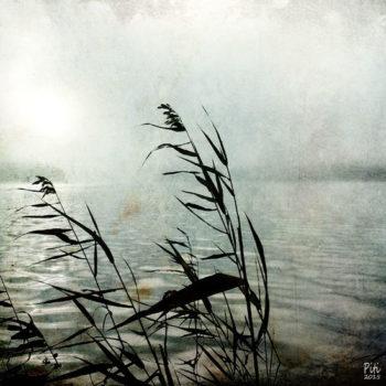 Teoksen nimi: Venäjän rajalla – järviruoko