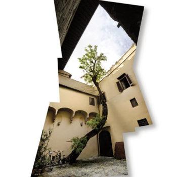 Teoksen nimi: Puu, Firenze