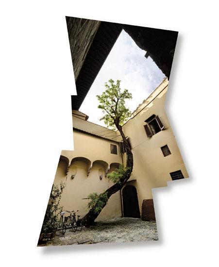 Puu, Firenze