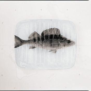 Teoksen nimi: Inner Space.2008
