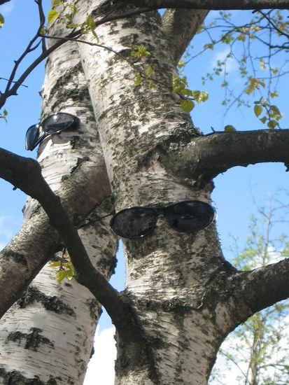 Mustat lasit