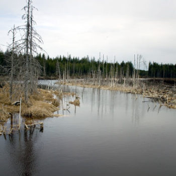 Teoksen nimi: Lumijoki II, 2013, mustevedos