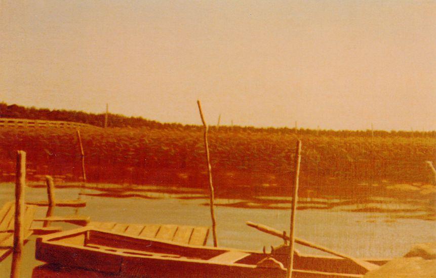 Kaislikkorantaa Porvoossa 1980