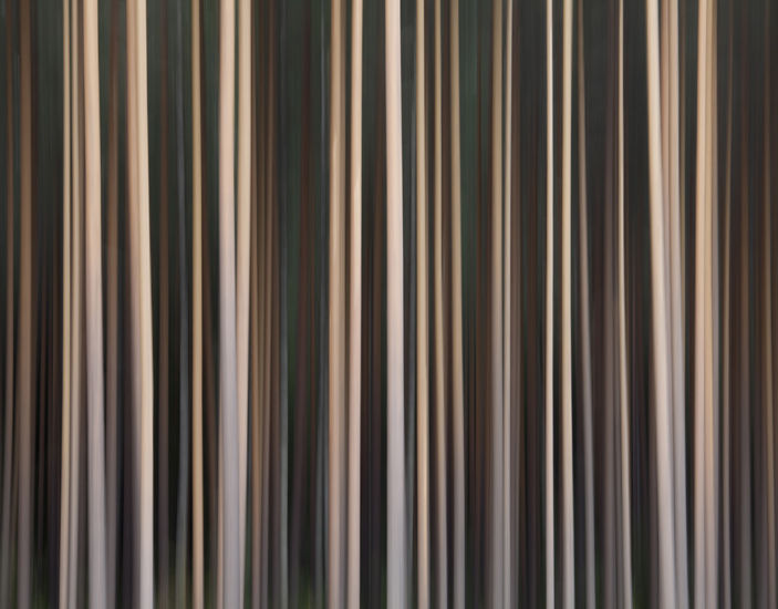 Forest #4, 2011