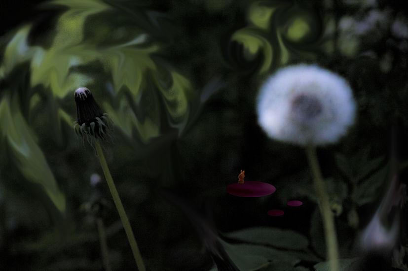 Dandelion pappus at night
