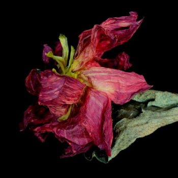 Name of the work: Flower for You