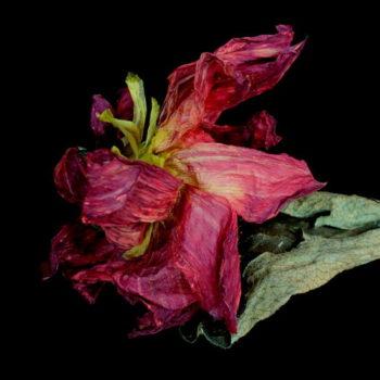 Teoksen nimi: Flower for You