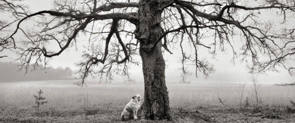 Koira ja puu, Kemiönsaari, 2014