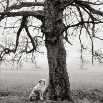 Teoksen nimi: Koira ja puu, Kemiönsaari, 2014
