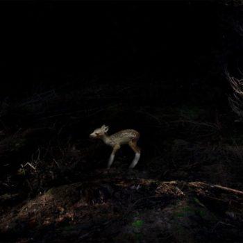 Teoksen nimi: Haavoittunut bambi