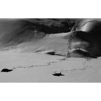 Teoksen nimi: Ice – Stay # 4 METSO JUHA Ice-Stay # 4, 2014 , 80 x 120 cm  Sarjasta Jää-jää / Ice-Stay / Eis-Bleib