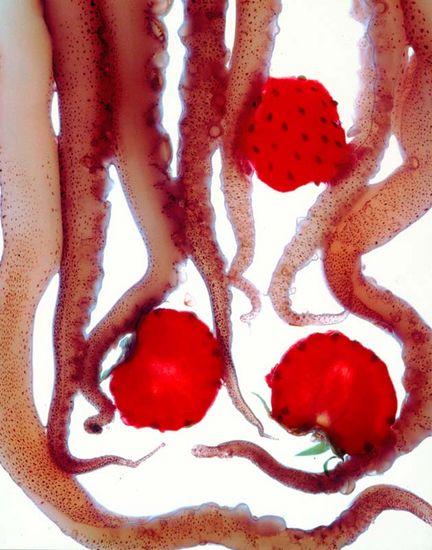 KALAMARIA NE FRAOULES – mustekalaa ja mansikoita