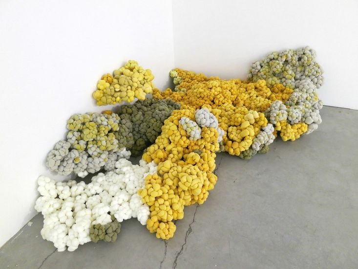 Kivikorallit (Corales pétreos)