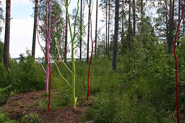 Metsä,2005