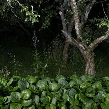 Teoksen nimi: Kilpi ja omenapuu, 2015