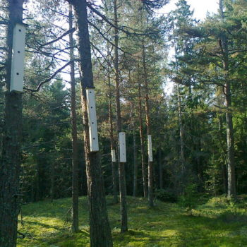 Teoksen nimi: Tintin tornit, Linnuntie 1-5, 00840 Vartiosaari, 2013