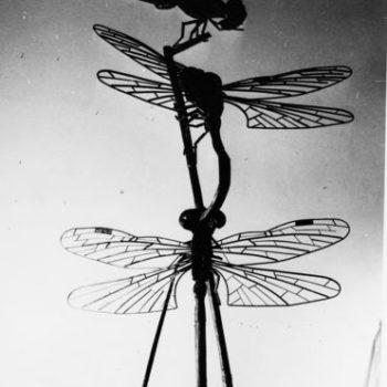 Teoksen nimi: Sudenkorennot, 1966