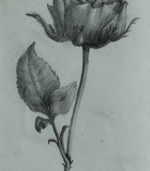 Teoksen nimi: Ruusu