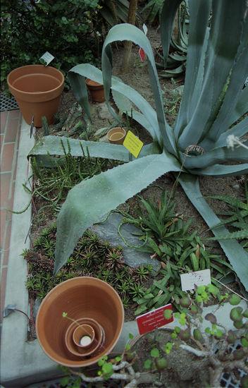 Keskusteluja kasvien kanssa, 2008