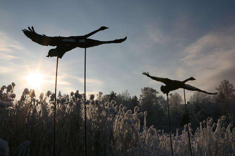 Tuusulanjärven linnut