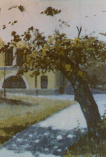 Aihe Neitsytpolulta 1985