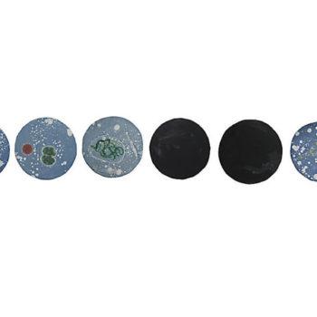 Teoksen nimi: Mustat Helmet – Anabaena sp./ Black Pearls – Anabaena sp.