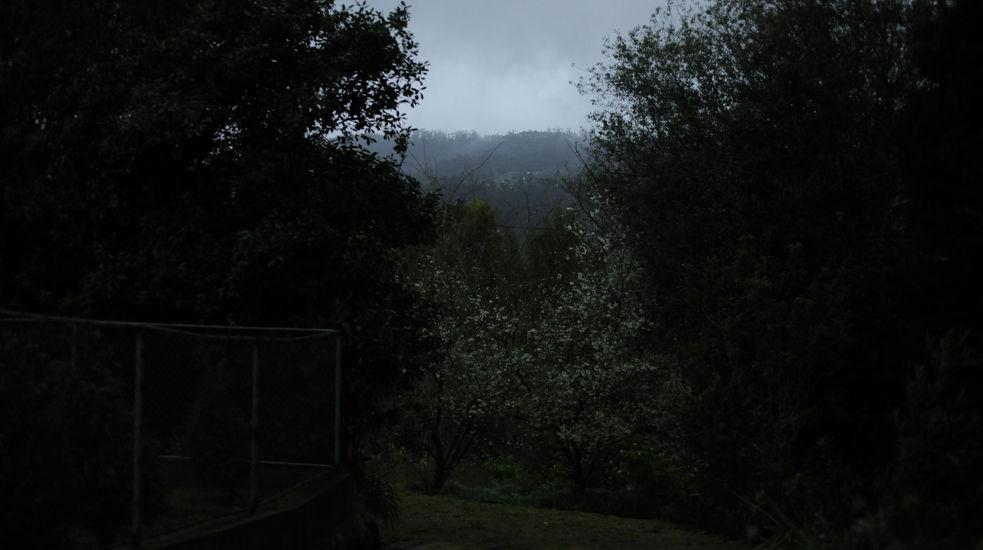 Metsässä 2