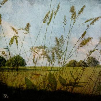 Teoksen nimi: Kesäpelto – heinät