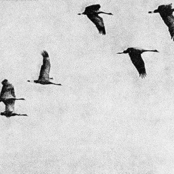 Teoksen nimi: Elämän ihmeet (Lintujen muutto)