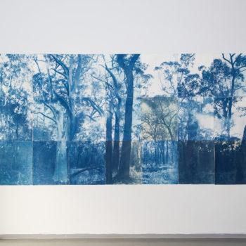 Teoksen nimi: Blue Forest