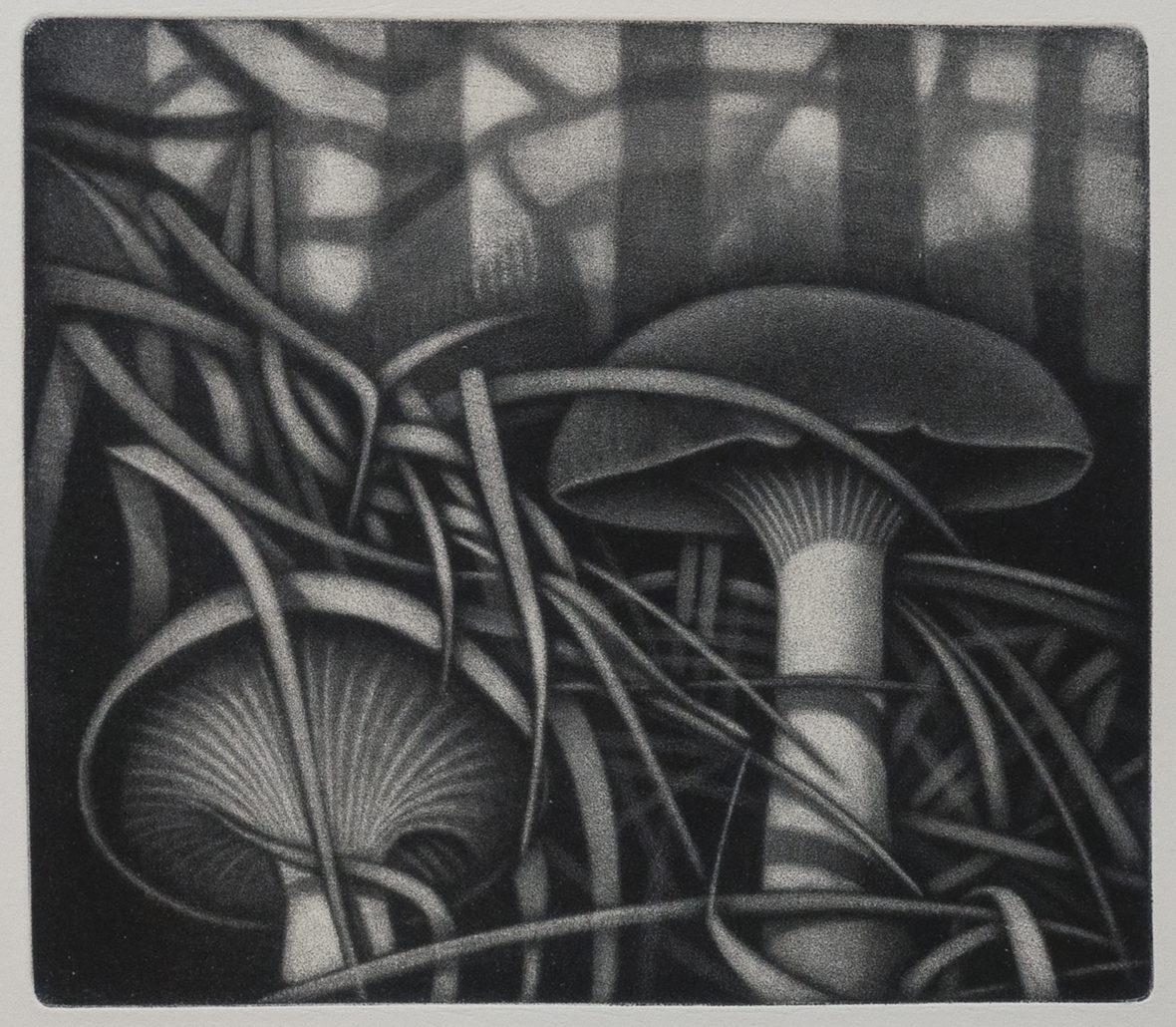 Sateinen metsä / Rainy Forest