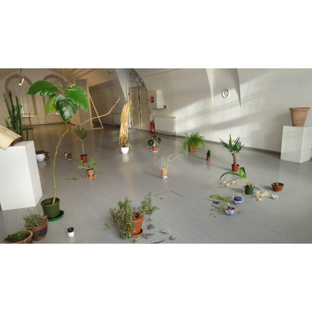 Keskusteluja kasvien kanssa osa2, 2016