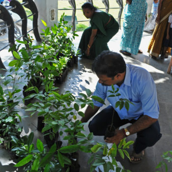 Teoksen nimi: Plants for Free, Kochi, India