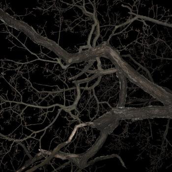Teoksen nimi: Forest #3