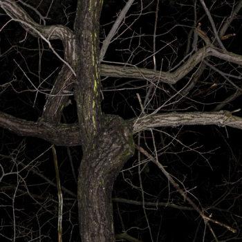 Teoksen nimi: Forest #6