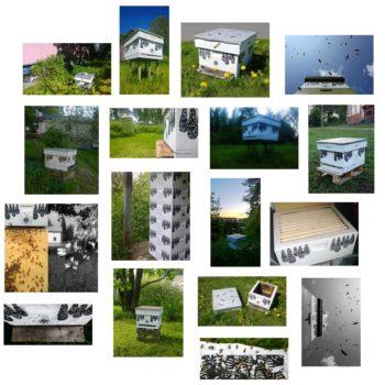 Teoksen nimi: 2015- 2018SaveHive mehiläispesät ympäristötaideteos mehiläispesillä