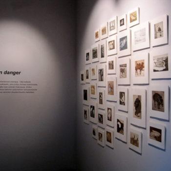 Teoksen nimi: Faune en danger – Muotokuvia katoavista eläinlajeista