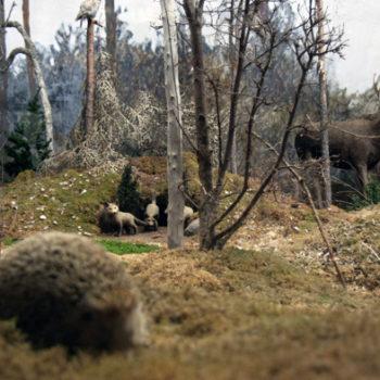 Teoksen nimi: Metsä on Nuori ja Täynnä Elämää // The Forest is Young and Full of Life
