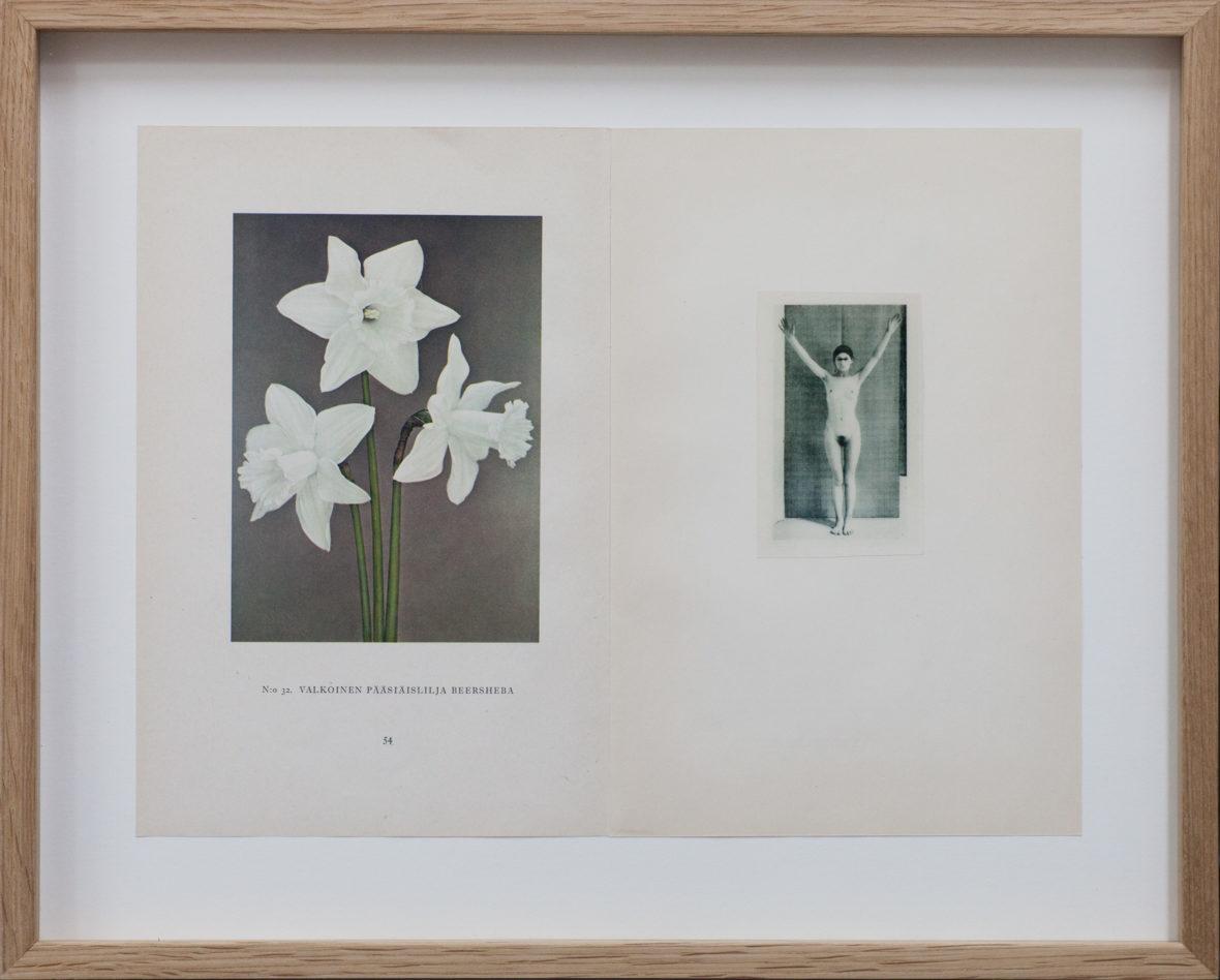 Herbarium (Valkoinen pääsiäislilja)