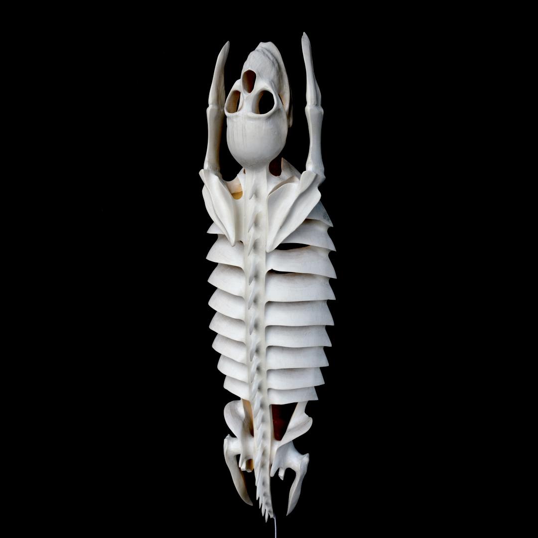 """""""Plan B – Calva Trilobita"""""""